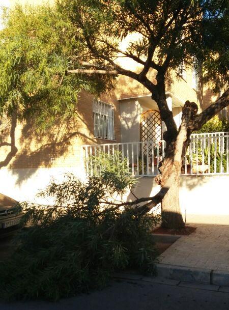 árbol betera 1