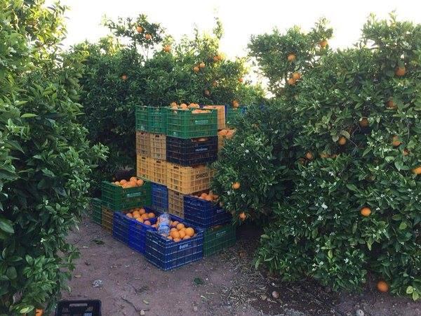 naranjas betera