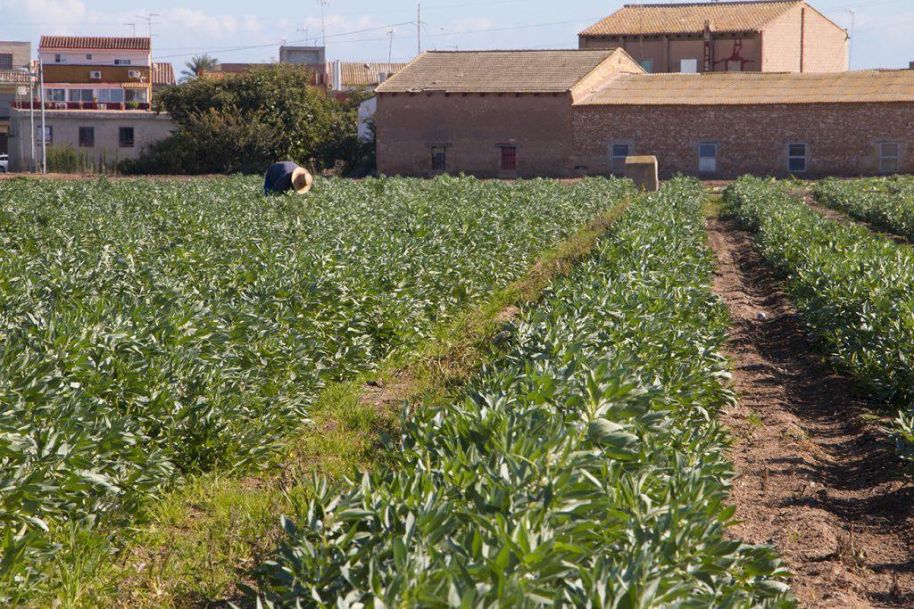 plan-agroalimentario