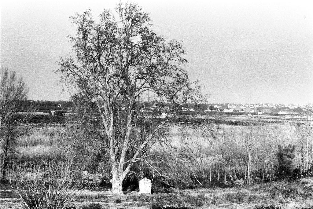 platanero riba-roja